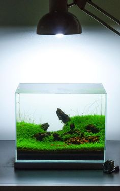 Fluval edge nano reef nano reef aquariums pinterest for Micro fish tank