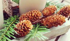 Adventskranz: Den kannst Du auch ganz leicht selber zusammenstellen. Nimm dazu vier schöne, große Kerzen, ein paar Tannenzweige, Tannenzapfen und Deko-Sterne und richte alles zusammen in einer Schale oder ganz einfach auf dem Tisch zusammen. Die Tannenzweige und Zapfen kannst Du, wenn Du möchtest, zusätzlich noch mit etwas Glitzerspray oder Schneespray besprühen. #DIY #Advent #Calendar #Decoration #Candle fir cone #Basteln #Dekoration #Weihnachten