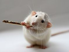I don't normally like rodents, but these little musical mice are kind of adorable
