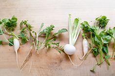春の七草を英語で説明できますか?春の七草粥 Rice porridge made with the seven herbs of Spring。 芹 : せり water dropwort、薺 : なずな Shepherd's Purse、御形 : ごぎょう cudweed、繁縷 : はこべら chickweed、仏の座 : ほとけのざ nipplewort、菘 : すずな turnip、蘿蔔 : すずしろ radish