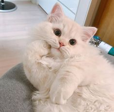 Cats And Kittens Images - Crazy Cats Laughing - Cats Photography Birthday - Dog And Cats Sketch Cute Funny Animals, Cute Baby Animals, Funny Cats, Grumpy Cats, Funny Humour, Funny Memes, Pretty Cats, Beautiful Cats, Cute Cats And Kittens