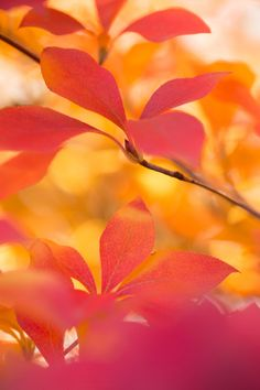 Bright Fall Colors - love this color pallet with corals oranges and more