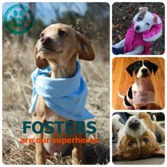 Dog Rescue Groups Chester County Pa