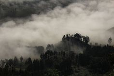 #asia #autumn #black #bromo #fog #foggy #foliage #forest #garden #indonesia #java #jungle #landscape #light #mist #national #nature #nobody #park #season #travel #tree #tropical #weather #wood