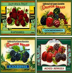 Mixed Berries Hot Pad Set 1- Quilt Blocks printed on cotton. Ready to sew.  Set of 4 - 4x4 inch quilt blocks with free Hot Pad Pattern $14.95.