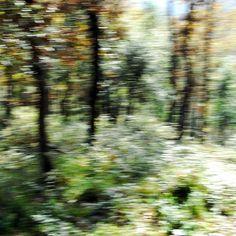El bosc es mou! Photos