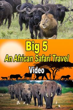 Big 5 - An African Safari Travel Video —  Single and thinking about a Kenya Safari  - check out Best Single Travel