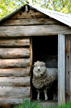 A Sheep Keeping Pasture and Shed, designed and installed by Karen Atkins, Proper Gardens.