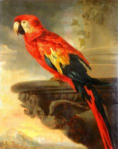 Parrot by Sir Peter Paul Rubens.