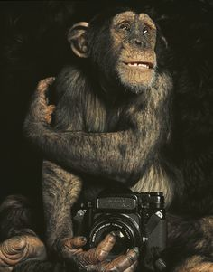 Sam Haskins. Chimp & Pentax 67  For those who feel that each time they reach for their camera it seems like they still have everything to learn. :-)