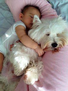 cuddle. source: I love westies