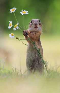 Will you make me the happiest squirrel in the world and be my forever mate? European Ground Squirrel - title A Handful of Flowers Amazing Animals, Animals Beautiful, Beautiful Flowers, Cute Creatures, Beautiful Creatures, Nature Animals, Animals And Pets, Nature Nature, Flowers Nature
