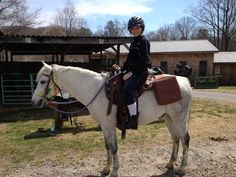 Grey Welsh Pony Gelding