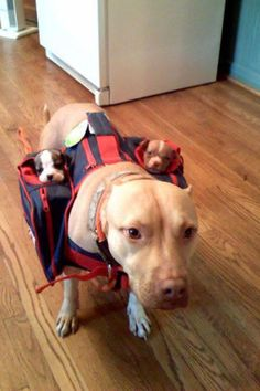 """Comes with sub-woofers""."
