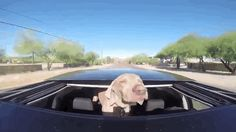 """""""THAT'S. THE. STUFF."""" 