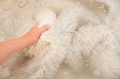 Hand wash How to clean and wash a natural sheepskin rug | Gorgeous Creatures's Leather Interior Decor and Gifts |  Hand wash sheepskins with gentle motion in mild wool wash in the bathtub / Rinse / Lay the washed sheepskin flat to dry, out of direct sun or heat / Brush the sheepskin with a metal pet brush once dry