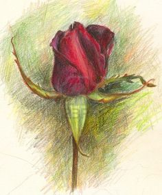 #Rose drawing!