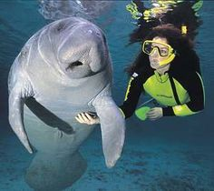 not me...but i went swimming with manatees in FL. so cool. they like their bellies scratched.