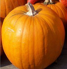 Pumpkin Organic Howden Pumpkin Seeds by thegardenstudio on Etsy, $2.00