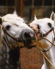 Horses in California, Colorado, Arizona, Idaho, Utah, and Washington are contracting the equine herpes virus.