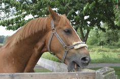 Cribbing Sucks: How to deal with your horse's addiction « HORSE NATION