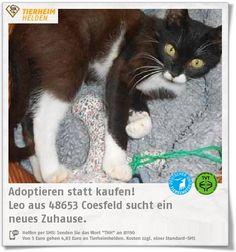 Leo kam als Fundkatze ins Tierheim Coesfeld.  http://www.tierheimhelden.de/katze/tierheim-coesfeld/hauskatze/leo/11964-1/  Leo ist kastriert, lieb und sehr anhänglich. Er ist erst ein Jahr alt.