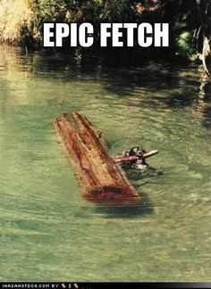 epic fetch! not gonna lie, that looks like my dog Lydia in the picture :]