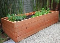 Huge Garden Planter Box made of Redwood and 8' feet long by 3' feet wide
