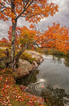 Lovely autumn ripples.                                                                                                                                                                                 More