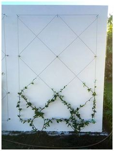 Use eye bolts and wire to create a wall mounted trellis for your climbing plants. Use eye bolts and wire to create a wall mounted trellis for your climbing plants. Adds ambiance and