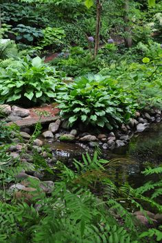 Shade garden planting - so cool and lush. I would like to add some water to the shade garden next spring. Lush, Tableaux Vivants, Shade Garden Plants, Nature Sauvage, Hosta Gardens, Pond Fountains, Water Features In The Garden, Woodland Garden, Ponds Backyard