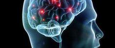 neuroscienze mente