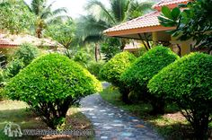 Photo in Koh Chang Paradise Resort & Spa - Google Photos Koh Chang, Resort Spa, Bungalow, Thailand, Paradise, Sidewalk, Villa, Photo And Video, Luxury
