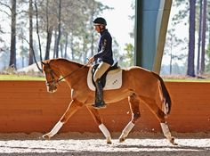 Boyd Martin and Santos schooling at Stable View Farm in Aiken earlier this month. Photo by Jenni Autry.
