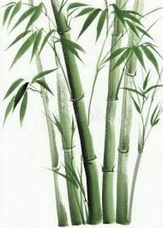 Illustration about Bamboo original watercolor painting. Illustration of stalk, decorative, symbol - 50697668 Watercolor Plants, Watercolor Paintings, Image Jesus, Motif Tropical, Bamboo Art, Bamboo Drawing, Frida Art, Wall Art Designs, Botanical Art