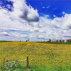 We're slightly obsessed with the views that captures on his bike rides through Oxford! Bike Rides, Vineyard, Tourism, Scenery, Oxford, Landscape, Instagram Posts, Outdoor, Beautiful