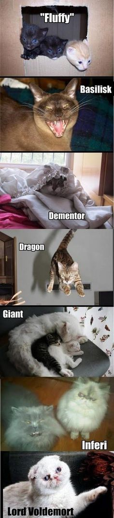 i like the dragon and voldemort the best - - Memes Harry Potter Harry Potter Jokes, Harry Potter Fandom, Harry Potter Characters, Funny Animal Pictures, Funny Animals, Cute Animals, Funny Cats, Harry Potter Universal, Fantastic Beasts