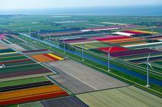 """坂井直樹の""""デザインの深読み"""": この広大なランドスケープデザインの色はチューリップの花の色だ。"""