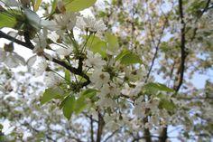 Frühlingsfotos