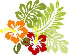 hibiskus - Google-Suche