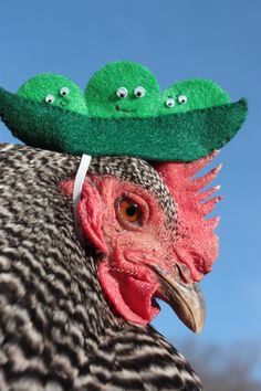 Ba-Gawks: Chickens in tiny hats: Peas in a pod