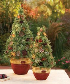 Make a Succulent Topiary. A succulent topiary suggests an evergreen tree yet makes viewers do a double take.s a container garden with a twist: a moss-filled cone planted with eye-catching, low-water, easy-care succulents. This topiary offers a fresh Fine Gardening, Succulent Gardening, Container Gardening, Succulents In Containers, Cacti And Succulents, Planting Succulents, Indoor Garden, Garden Art, Outdoor Gardens