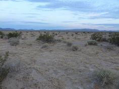 No lack of desert here