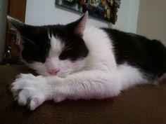 Katze Thommy
