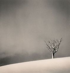 Leafless tree.Michael Kenna