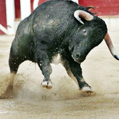 SIGN TO END BULLFIGHTING it has no place in a modern society. It is cruel and inhumane. thank you