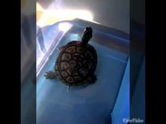 This pet is very funny - YouTube