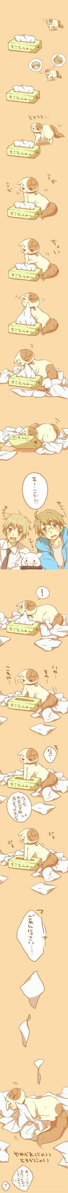 マイ- Hetalia | Nekotalia - America / England - (http://www.pixiv.net/member.php?id=581797) too cute~! I love Iggy cat to death!