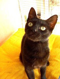 Helfende Hände e.V. - Katze Betty (EKH ca. 2-3 Jahre) sucht ein Zuhause…