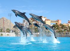 swimming with dolphins in cabo
